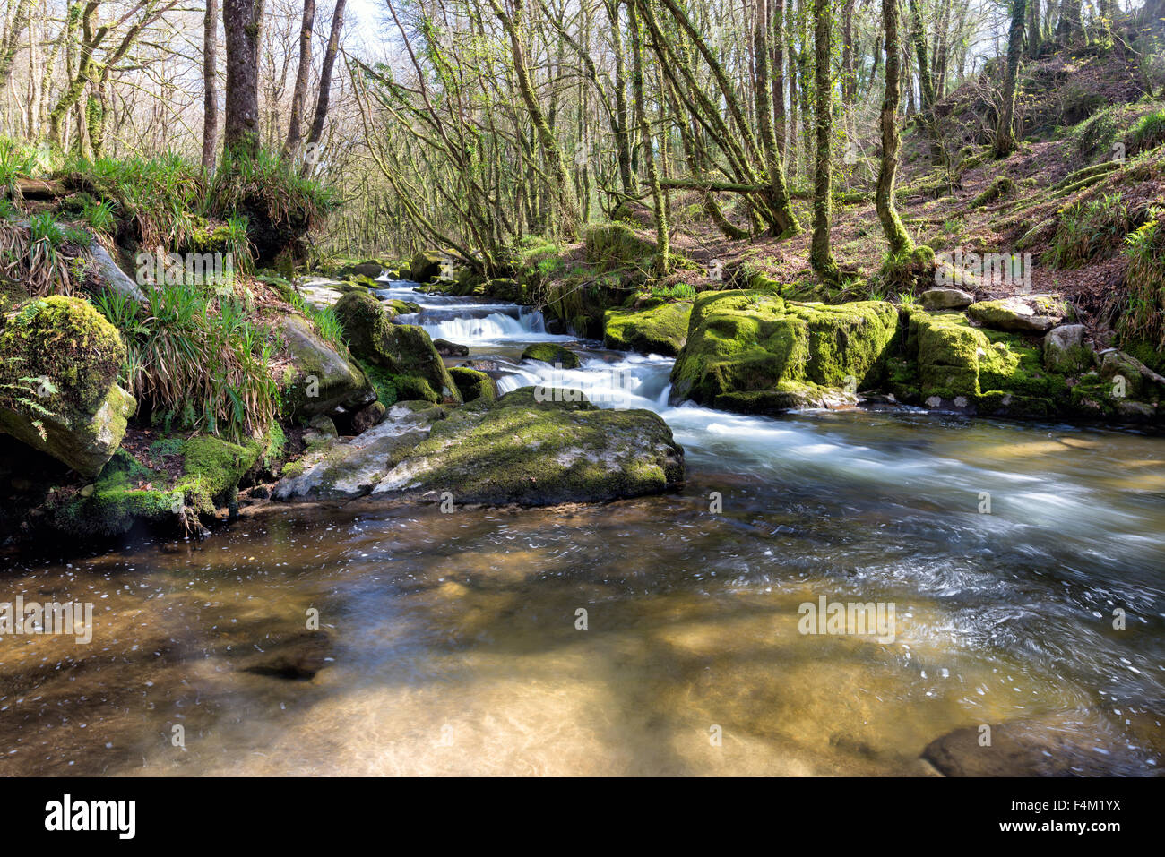 Water flowing through Golitha Falls on Bodmin Moor in Cornwall - Stock Image