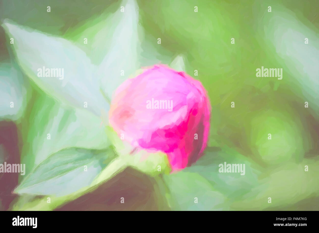 magenta peony bud and leaves close up - spring nature digital painting - Stock Image
