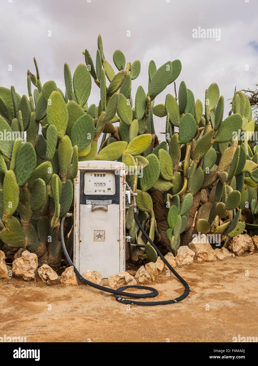 Gas pump and cactus, Solitaire, a small settlement in the Khomas Region of central Namibia, Africa