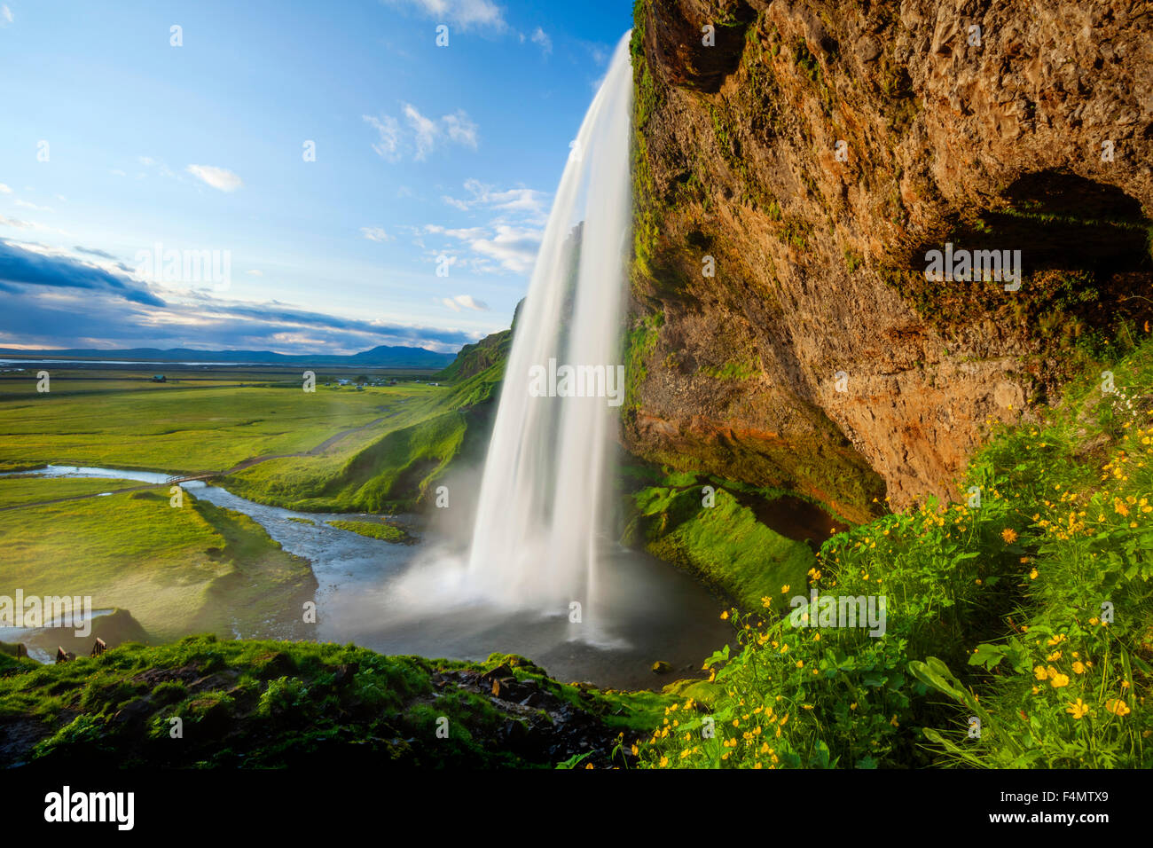 Buttercups beside 60m-high Seljalandsfoss waterfall, Sudhurland, Iceland. - Stock Image