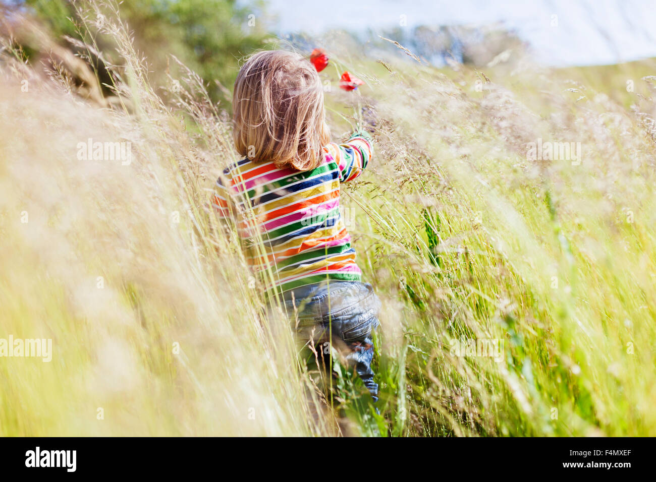Rear view of girl holding flowers and walking at grassy field - Stock Image