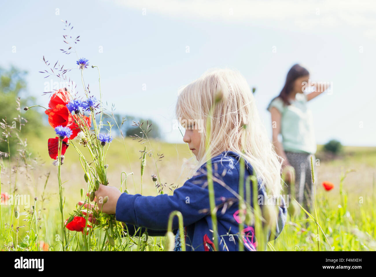 Girl holding wildflowers at grassy field - Stock Image