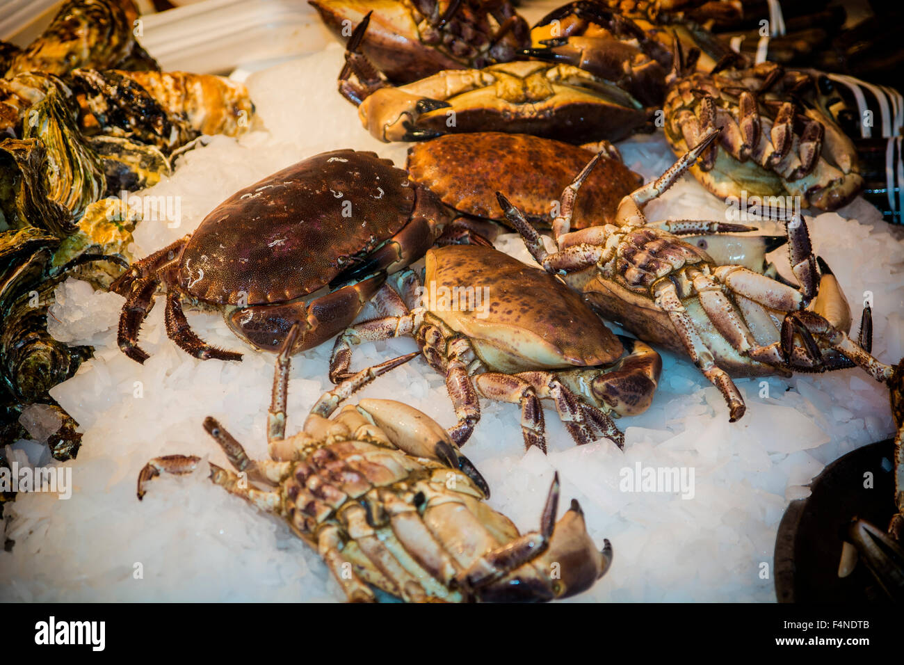 Fresh marine crabs displayed on crushed ice at a seafood market or fisheries to be used in gourmet seafood cuisine - Stock Image