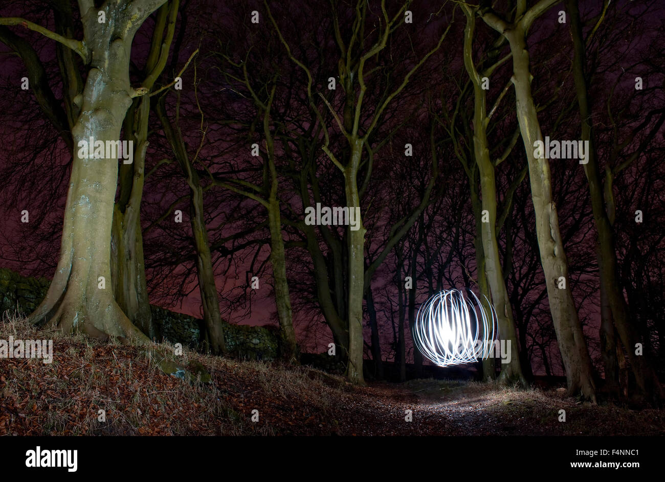 Trees And Ball Of Light At Night Painting In Woods Yorkshire Uk