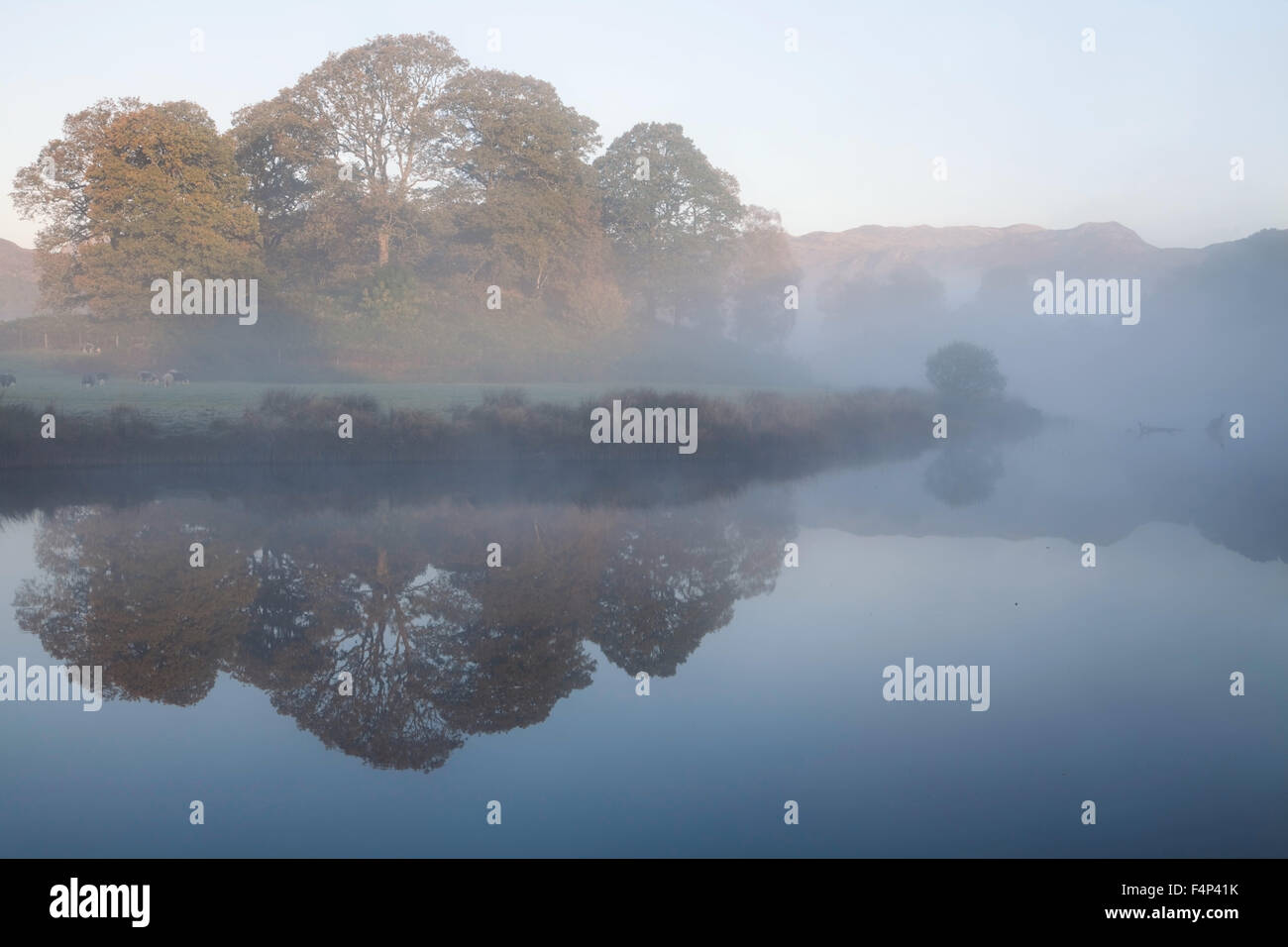 A copse of deciduous trees near Elterwater in a foggy Langdale Valley Stock Photo