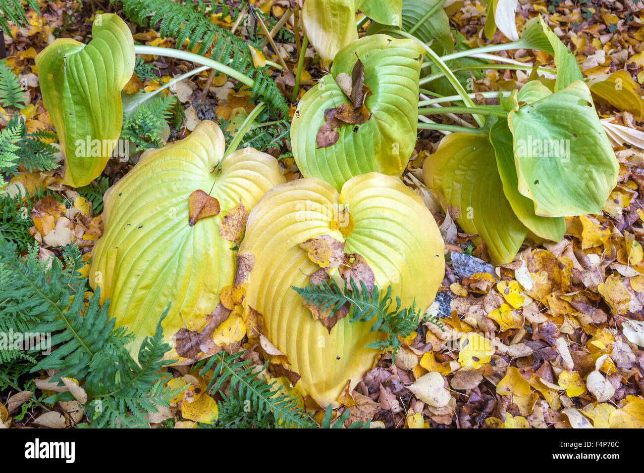 Plants With Yellowing Leaves Stock Photos Plants With Yellowing