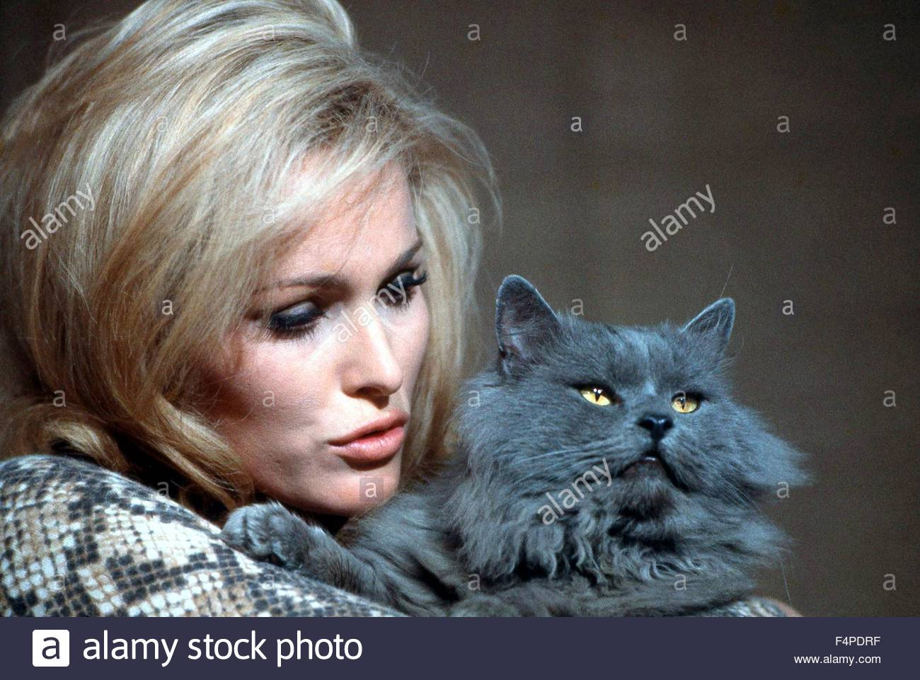 Ursula Andress / What's New Pussycat 1965 directed by Clive Donner - Stock Image