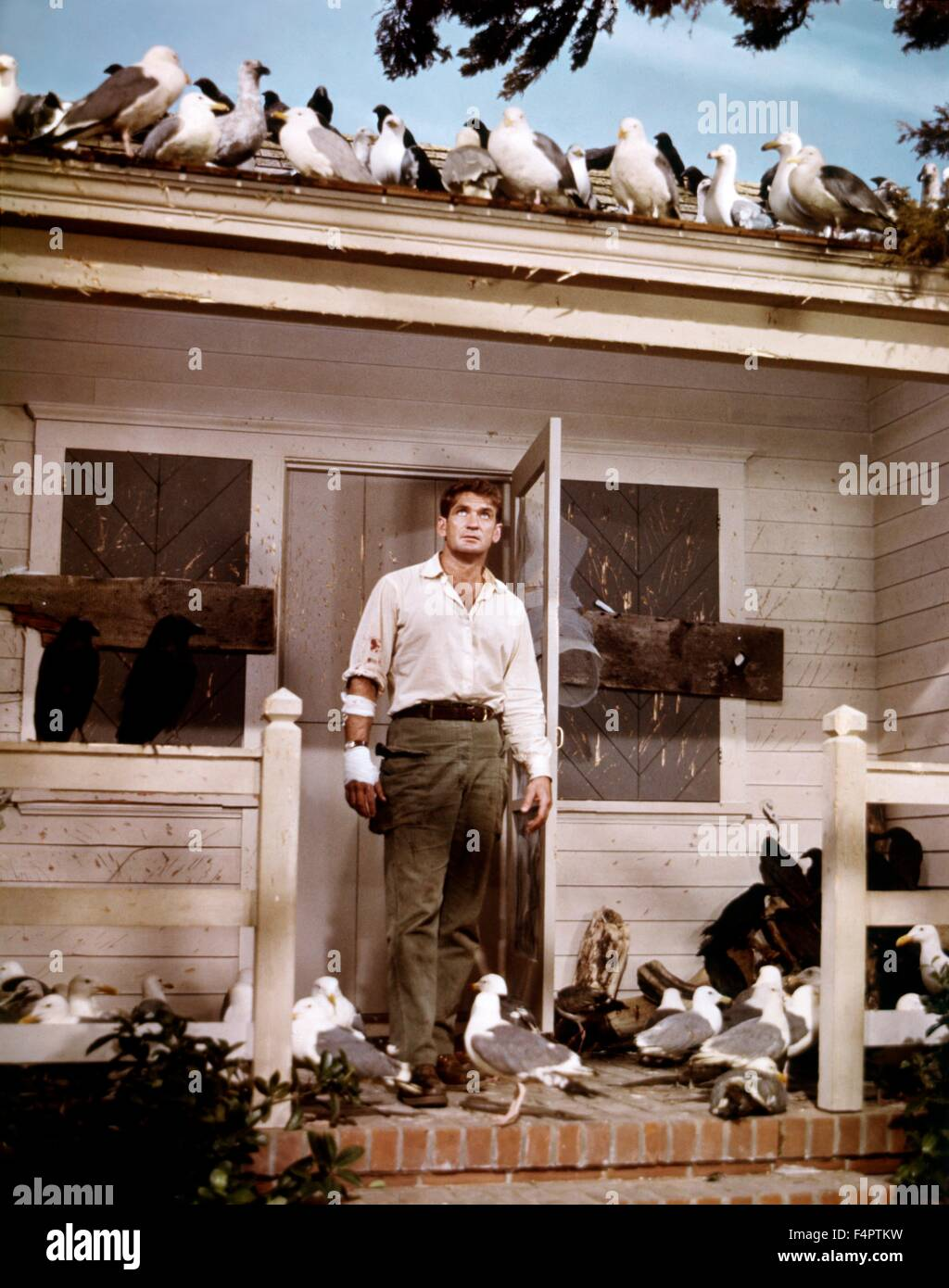 Rod Taylor / The Birds / 1963 directed by Alfred Hitchcock [Universal Pictures] - Stock Image