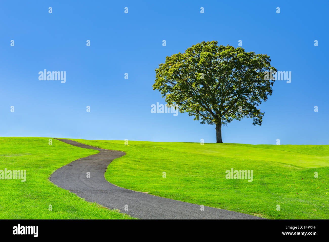 Lone tree on a green meadow under a clear blue summer sky - Stock Image