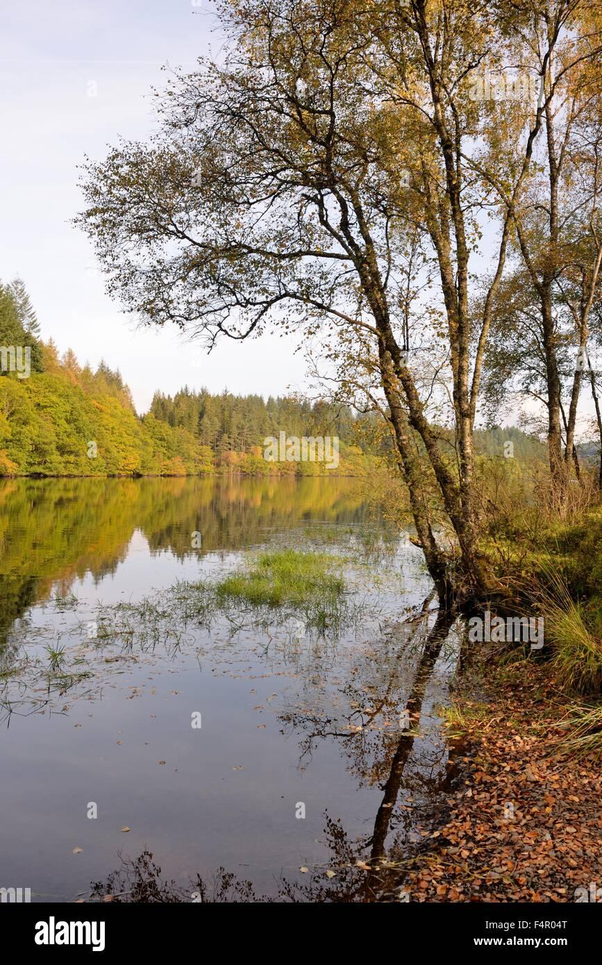 Loch Drunkie on the 'Three Lochs Forest drive' in the Queen Elizabeth forest park, Scotland, UK - Stock Image
