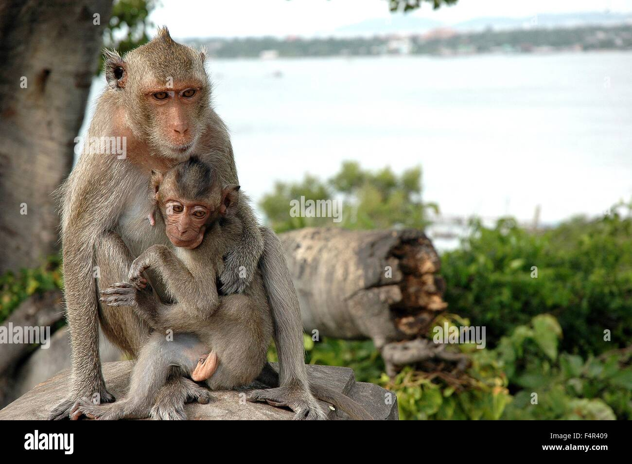 Monkeys - Stock Image