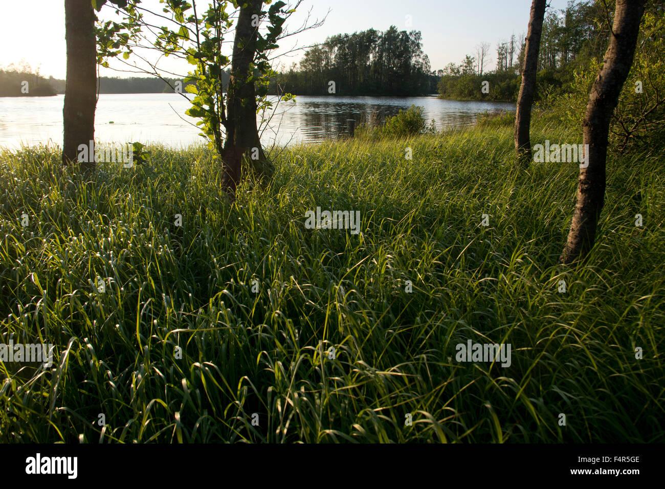 Sweden, Europe, Skane, Örkeljunga, Store Sjö, lake, shore, trees, summer, islands, reed, grass - Stock Image