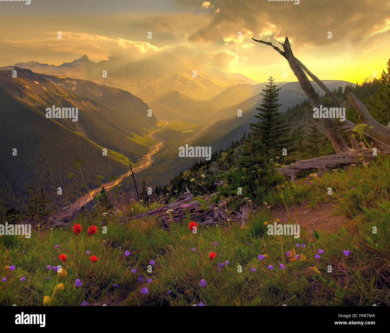 USA, United States, America, Pacific Northwest, Washington, Washington State, Mount Rainier, National Park, volcanic, - Stock Image