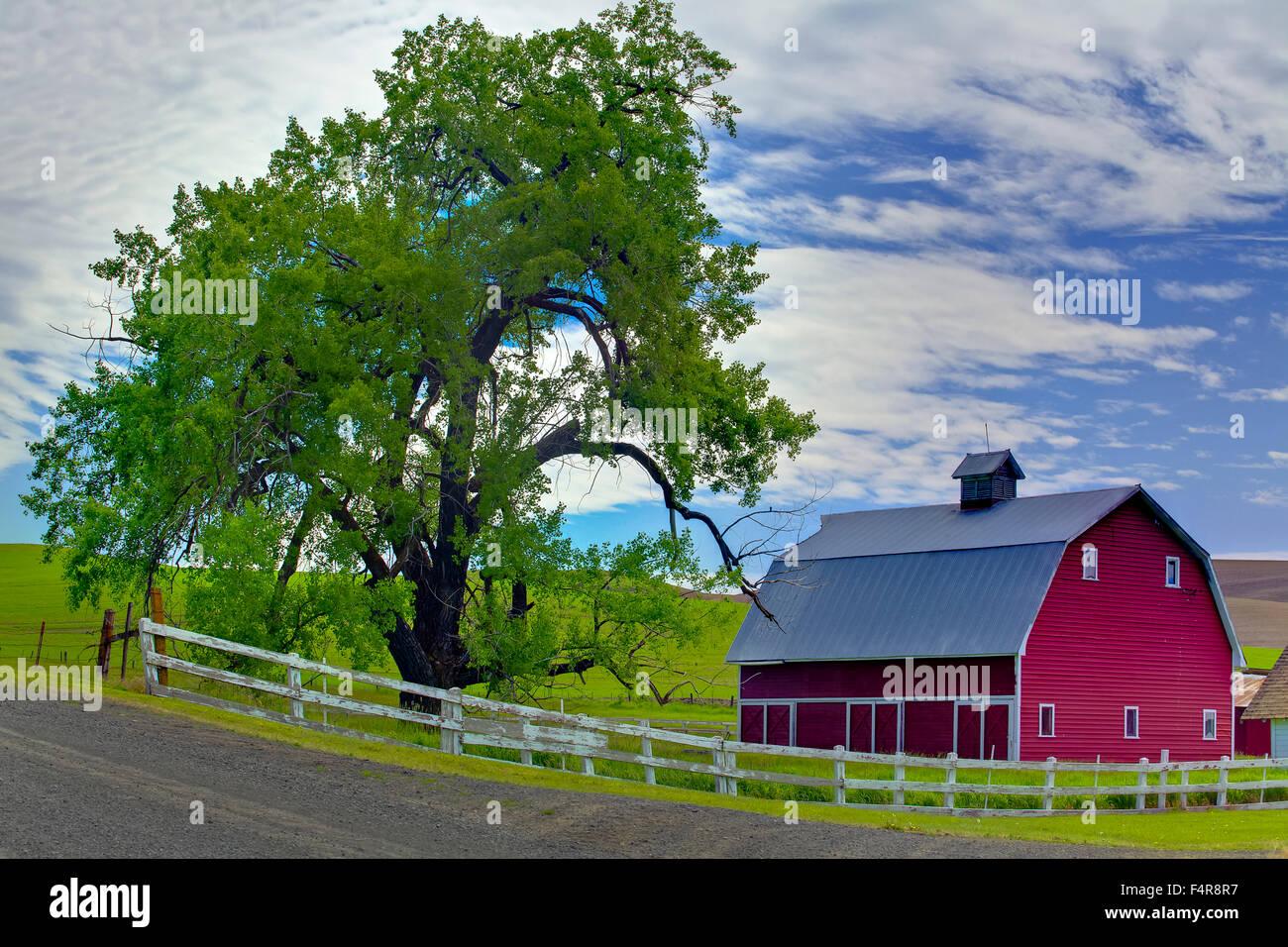 USA, United States, America, Pacific Northwest, Washington, Washington State, barn, farm, tree - Stock Image