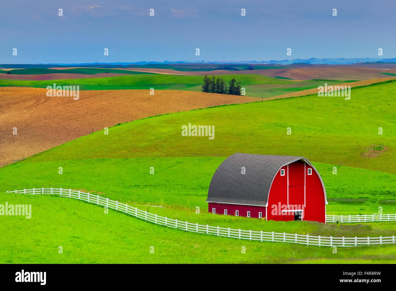 USA, United States, America, Pacific Northwest, Washington, Washington State, Steptoe Butte, Palouse, fields, barn - Stock Image