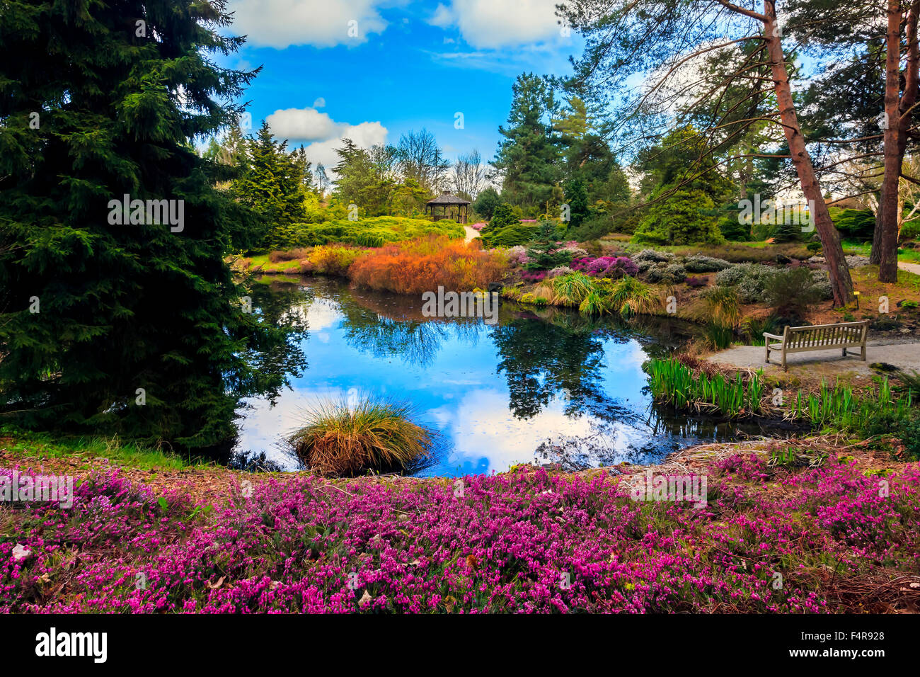 Canada, British Columbia, Japanese Gardens, Bench, Pond, Blue Sky,  Reflection, Gardens, Blossoms, Blooms, Pink, Trees