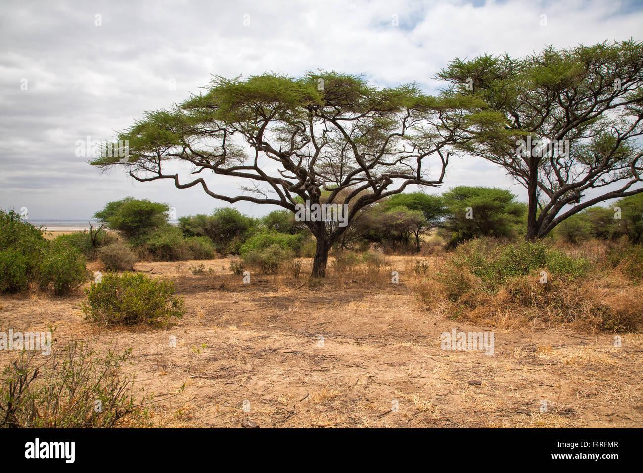 Africa, trees, Lake Manyara, national park, scenery, landscape, safari, travel, savanna, Tanzania - Stock Image