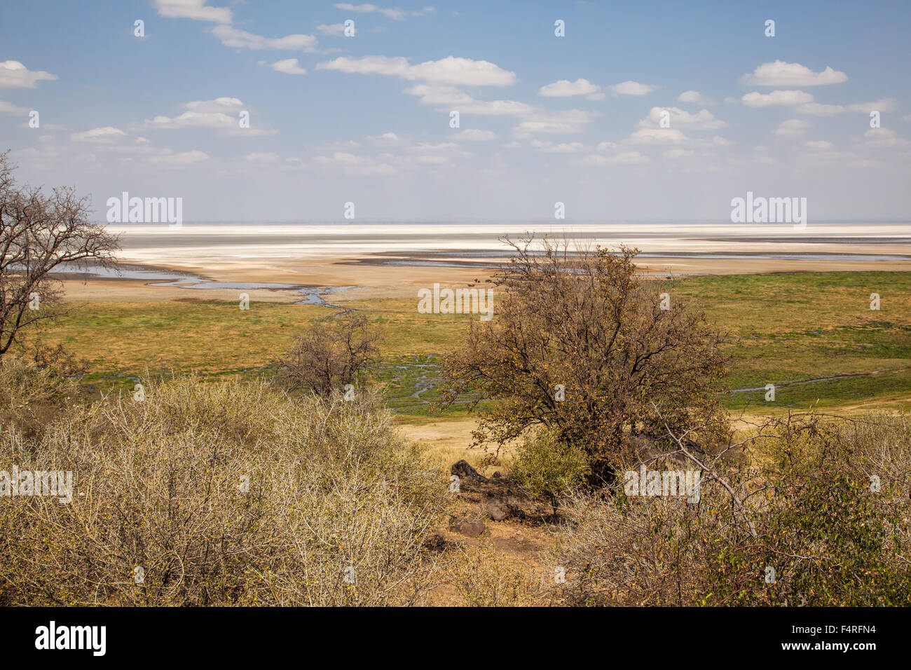 Africa, trees, Lake Manyara, national park, scenery, landscape, safari, travel, lake, Tanzania, water - Stock Image