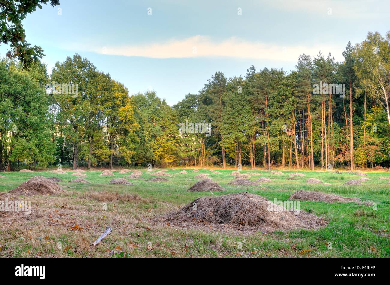 Autumn landscape. Trees and green glade in the forest. - Stock Image