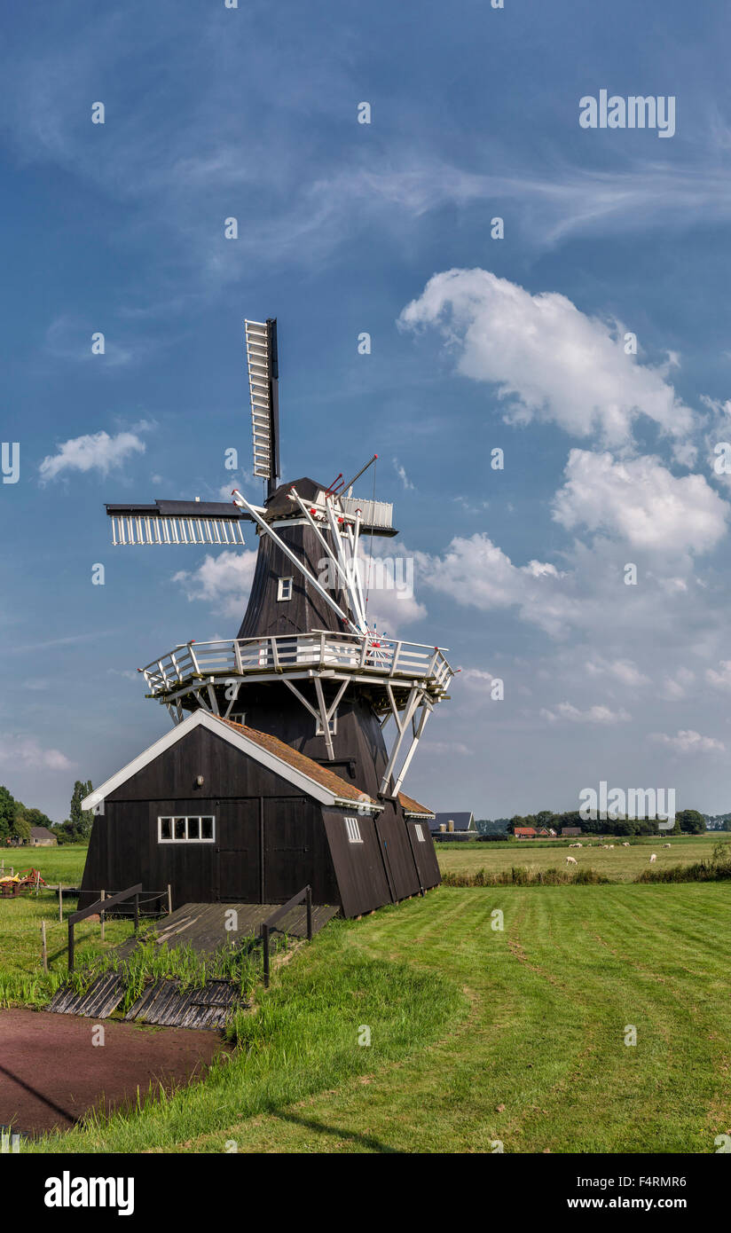 Netherlands, Europe, Holland, Ten Boer, Groningen, windmill, field, meadow, summer, Bovenrijge - Stock Image