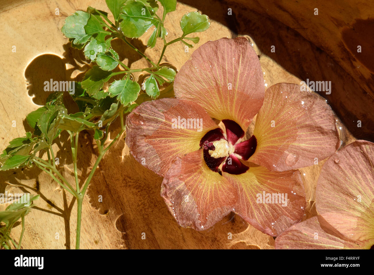 Amiranten, flowers, Deko, decoration, Desroches Island, Seychelles, Africa, pot, water - Stock Image