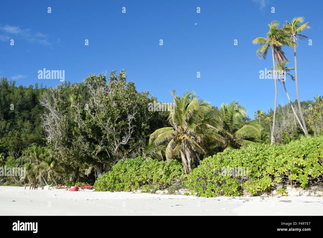 North Island, palms, Seychelles, Africa, beach, seashore, - Stock Image