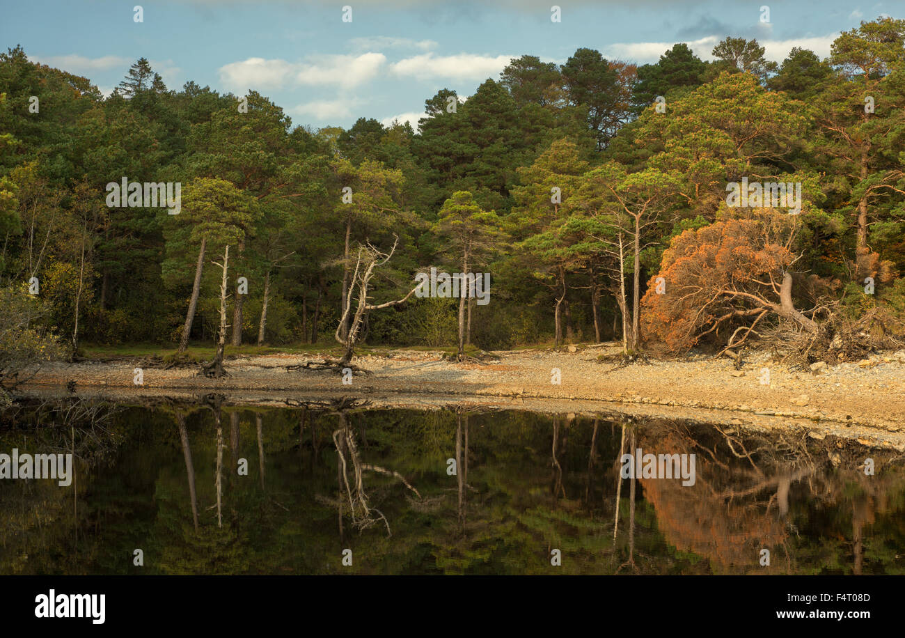 Autumn landscape.Trees and water reflections. - Stock Image