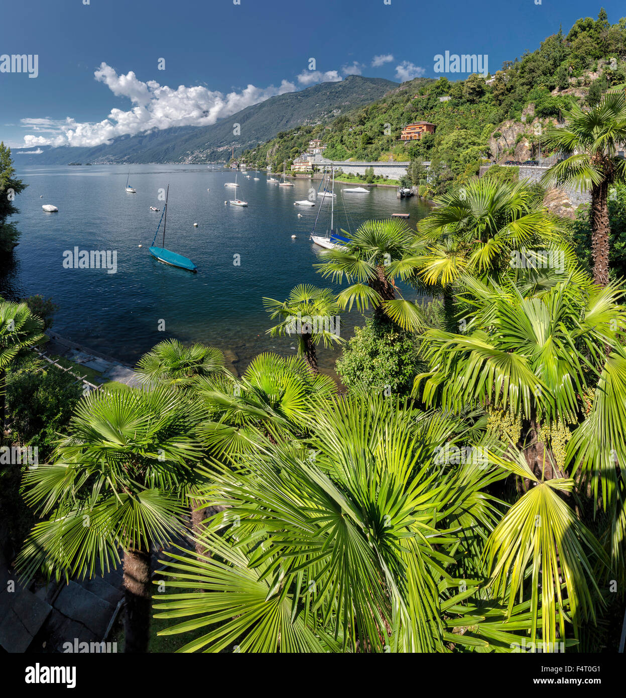 Switzerland, Europe, Ascona, Ticino, Secluded bay, palm trees, Lake Maggiore, landscape, water, trees, summer, mountains, - Stock Image