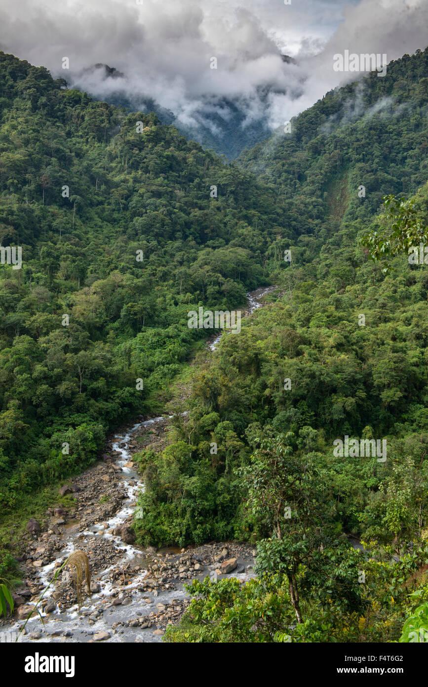 South America, Latin America, Peru, Amazonia, Manu, National Park, UNESCO, World Heritage, clud forest - Stock Image
