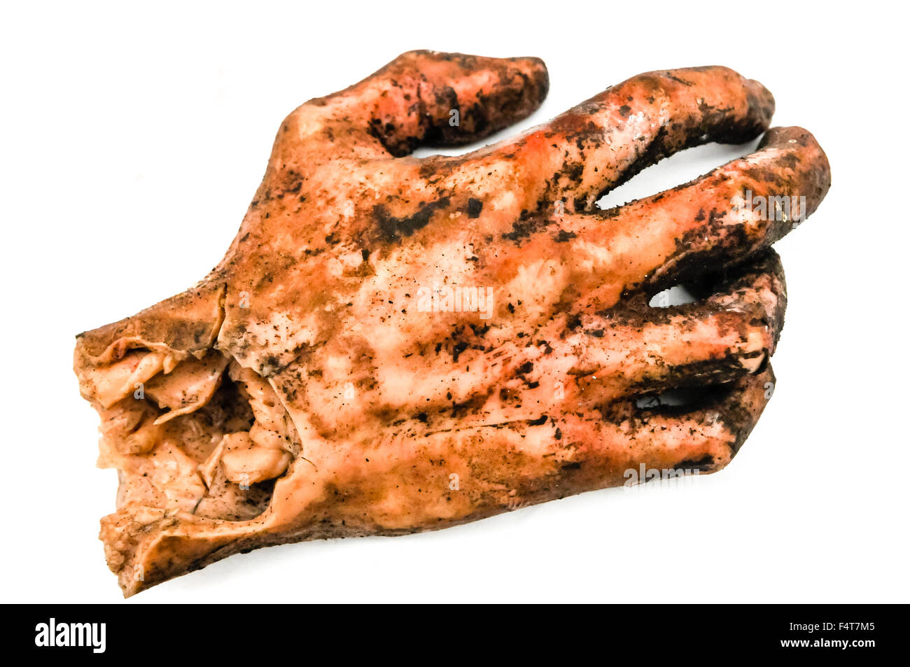 Model of a human hand, after being blown off by a bomb, as used for military training for disaster situations - Stock Image