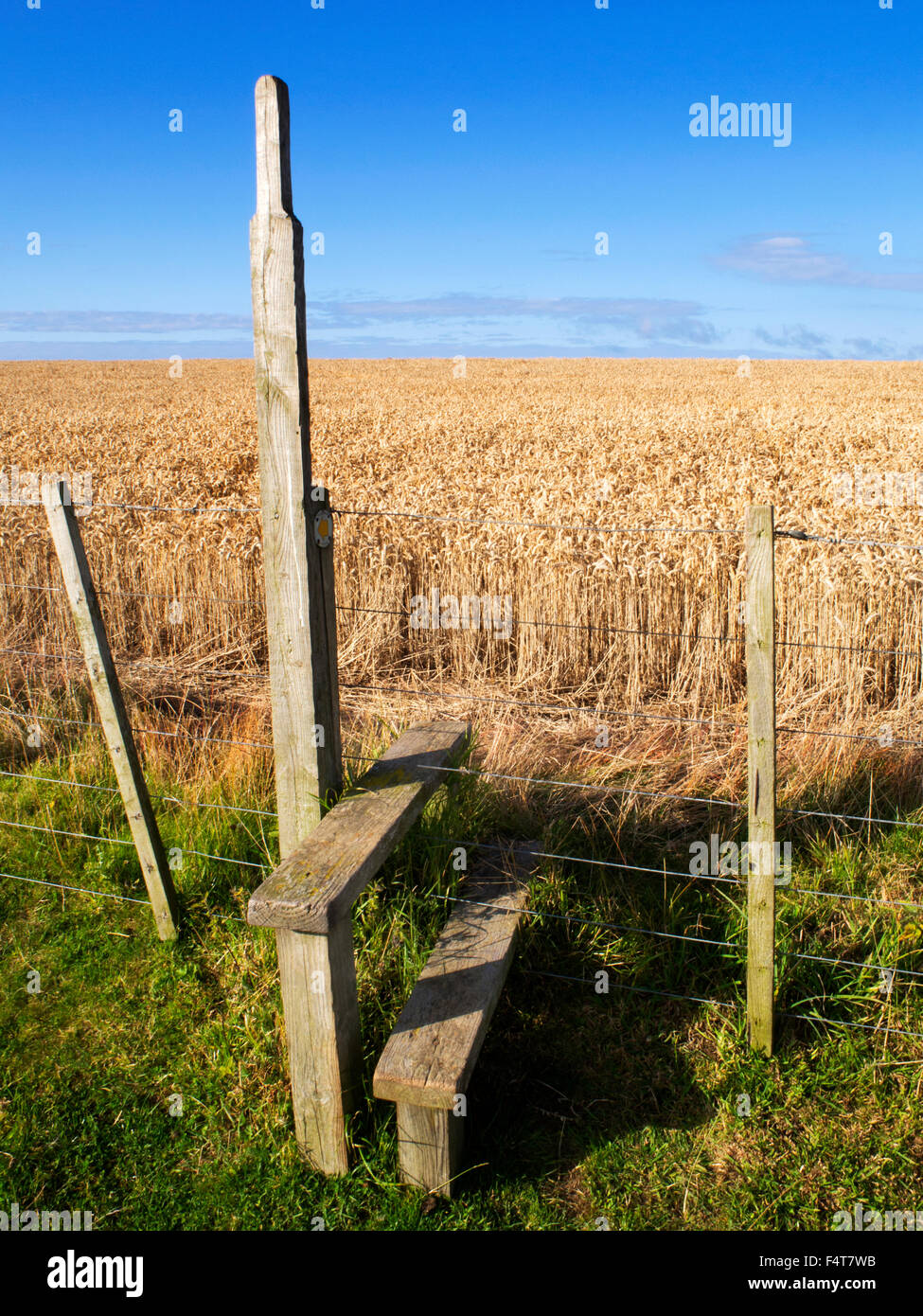 Stile over a Wire Fence into a Wheat Field near Beadnell Northumberland England - Stock Image