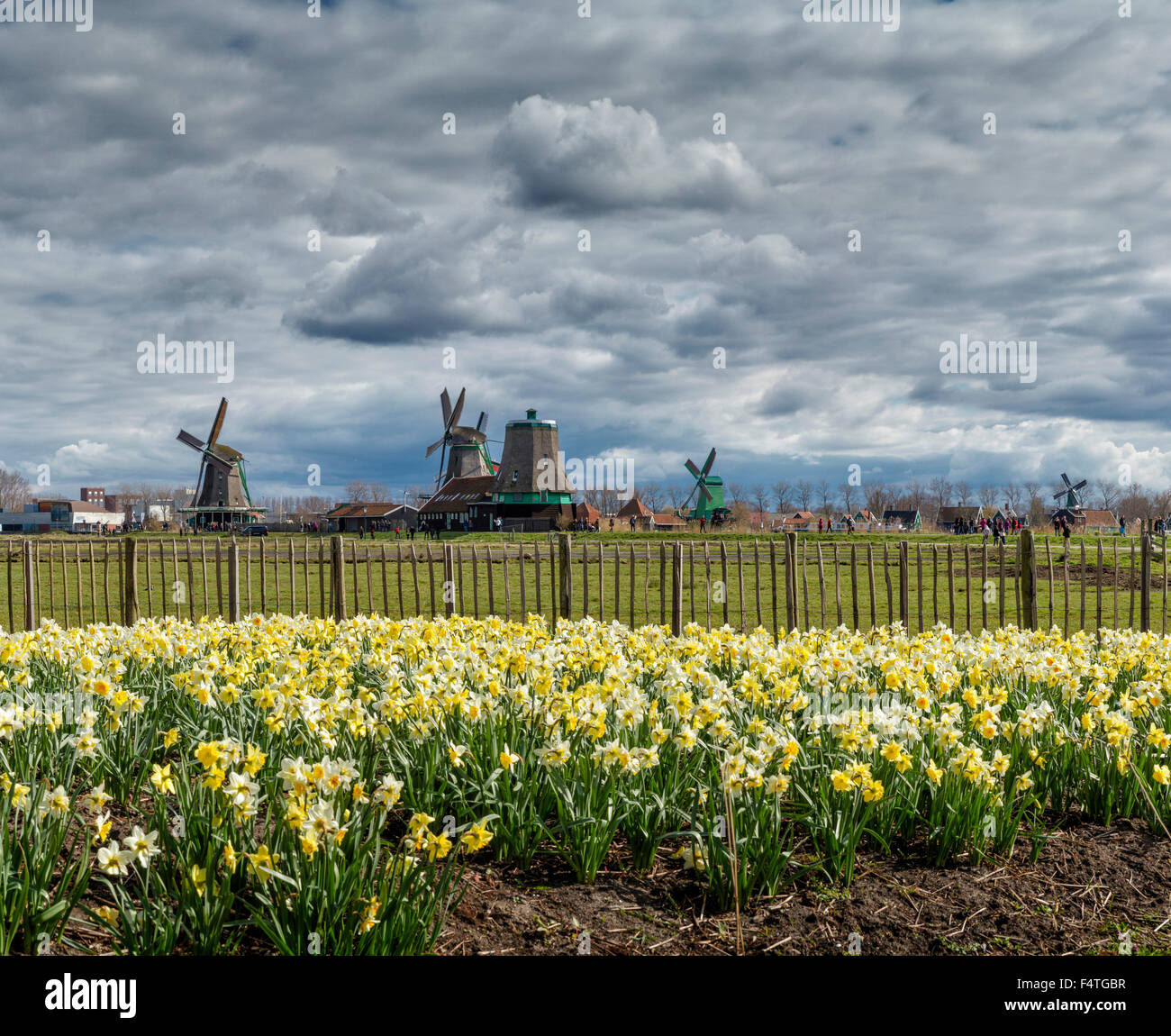 Open air museum De Zaanse Schans with windmills Stock Photo