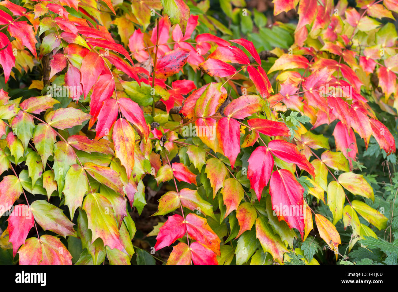 Spiky Shrub Stock Photos Spiky Shrub Stock Images Alamy