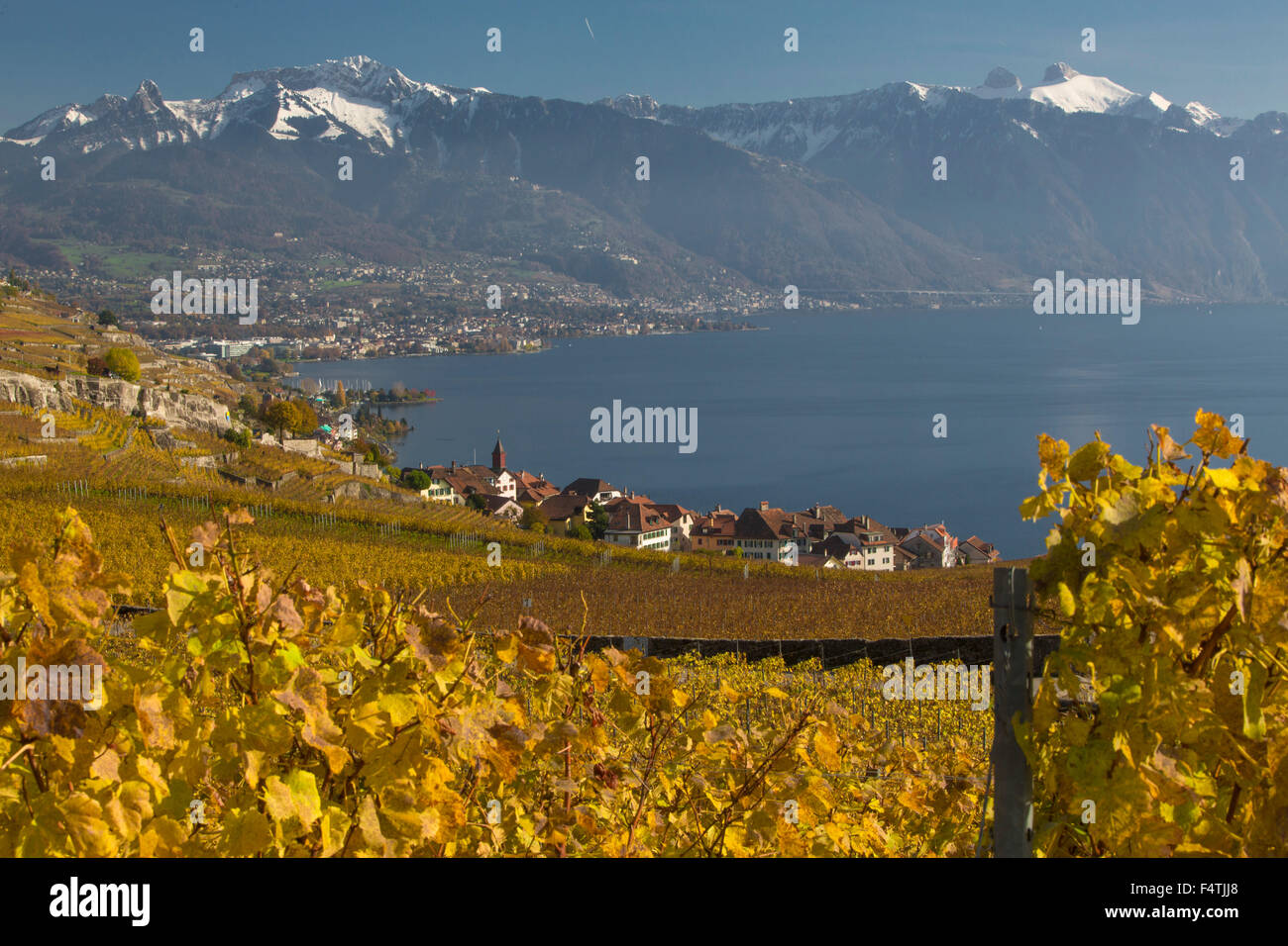 Village Rivaz VD on lake Geneva in autumn, - Stock Image