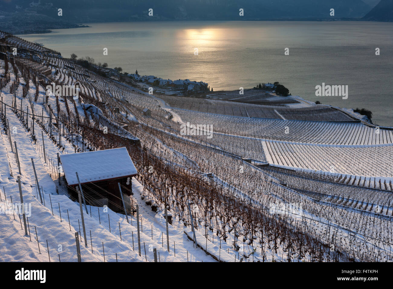 Rivaz, Switzerland, canton, Vaud, lake Geneva, Leman, vineyards, wine-growing, sunrise - Stock Image