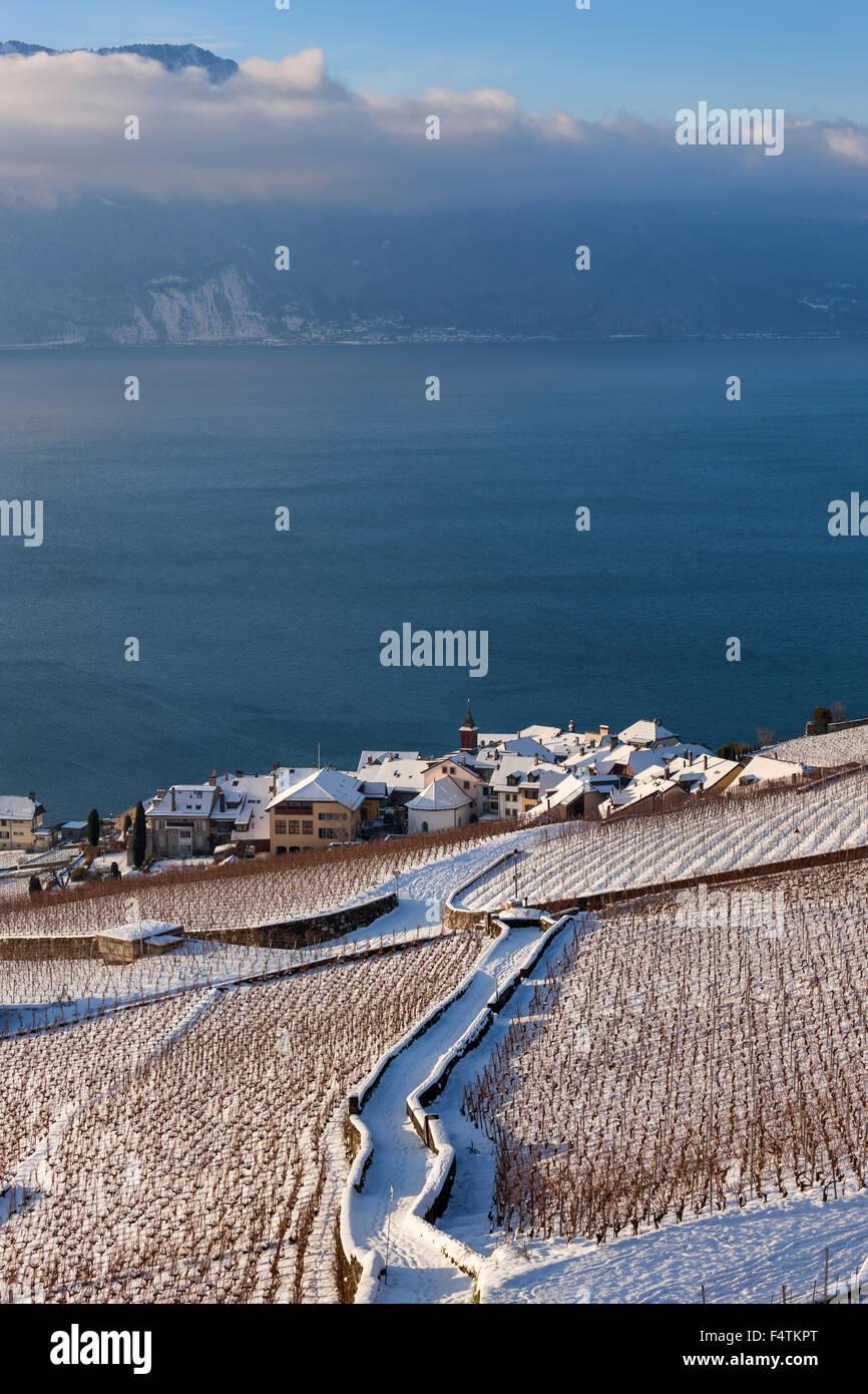 Rivaz, Switzerland, canton, Vaud, lake Geneva, Leman, vineyards, wine-growing, village, way, morning light - Stock Image