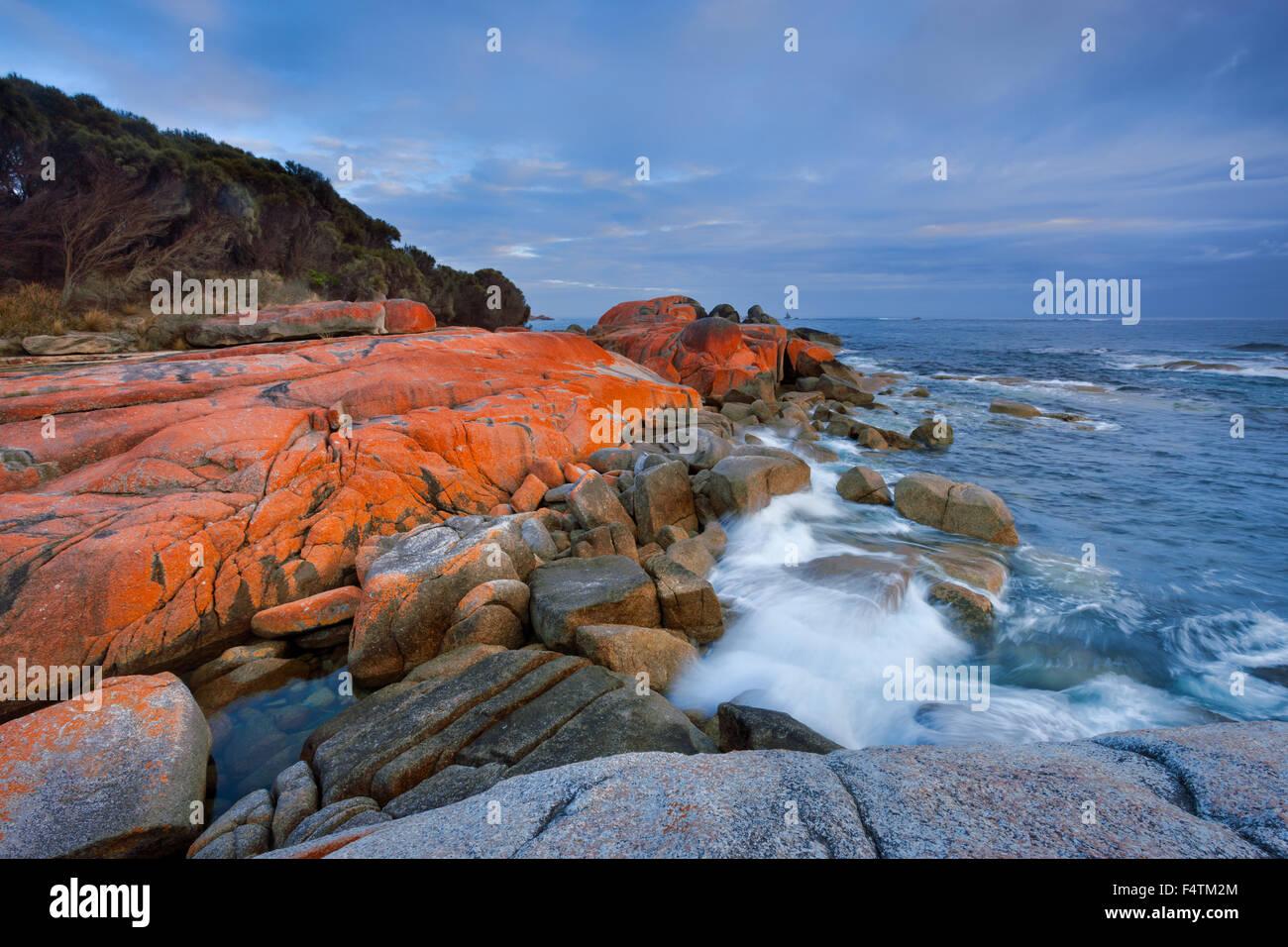 Bay of Fires, Australia, Tasmania, east coast, sea, rock, cliff, lichens - Stock Image
