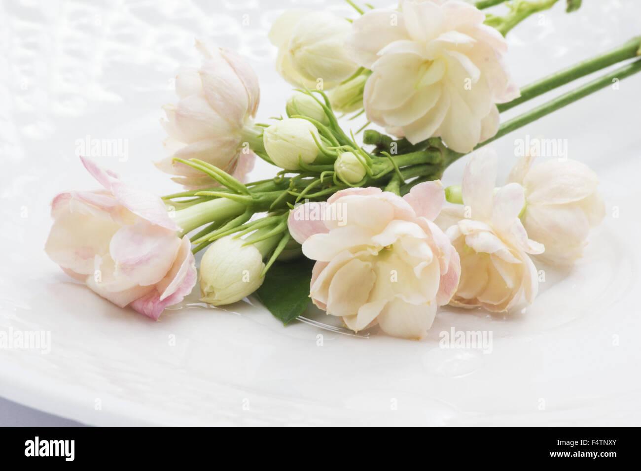 Jasmine flowers arabian jasmine jasminum sambac on a white plate jasmine flowers arabian jasmine jasminum sambac on a white plate izmirmasajfo