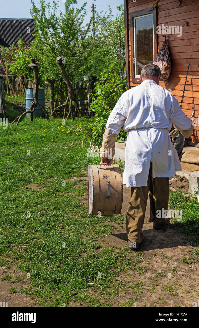Spring bee swarm run away and its capture. - Stock Image