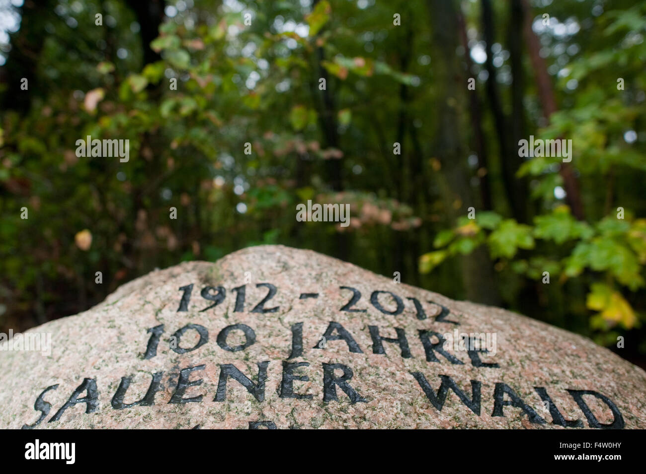 Sauen, Germany. 20th Oct, 2015. A stone reads '100 Jahre Sauener Walk' (lit. 100 years of Sauen Forest) - Stock Image
