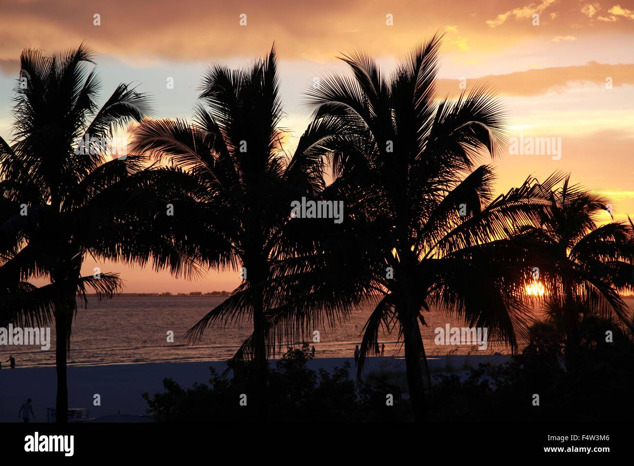 Sanibel, Florida, USA. 9th Aug, 2013. Palm trees in silhouette at sunset. Situated along the Gulf of Mexico, just Stock Photo
