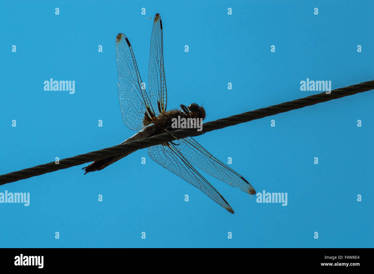 Iron Wire Stock Photos & Iron Wire Stock Images - Alamy
