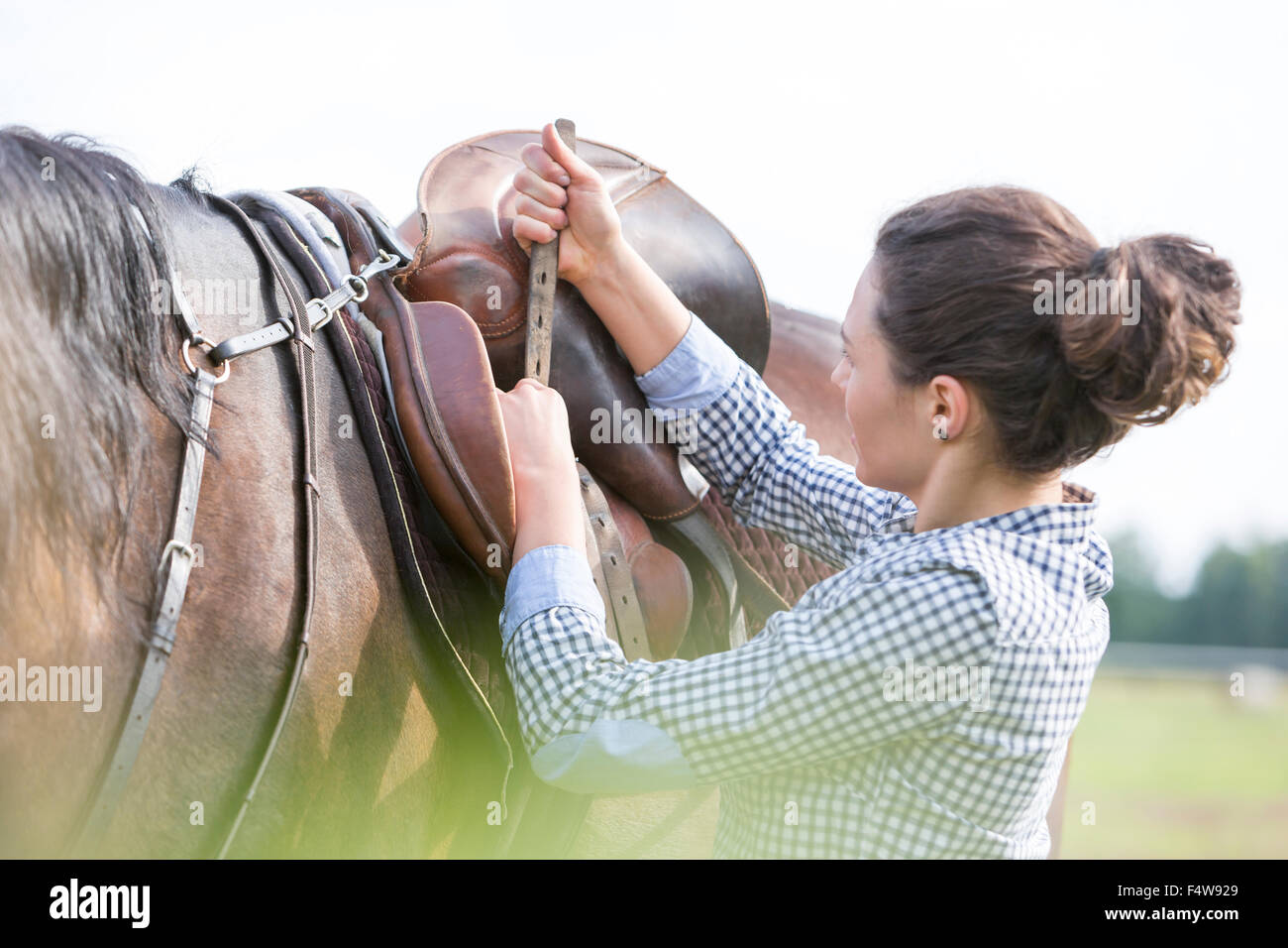 Woman tightening horse saddle for horseback riding - Stock Image