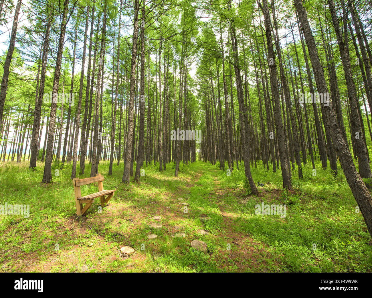 Genhe, Inner Mogolia, CHN. 13th June, 2015. Genhe, CHINA - June 13 2015: (EDITORIAL USE ONLY. CHINA OUT) Genhe Wetland - Stock Image