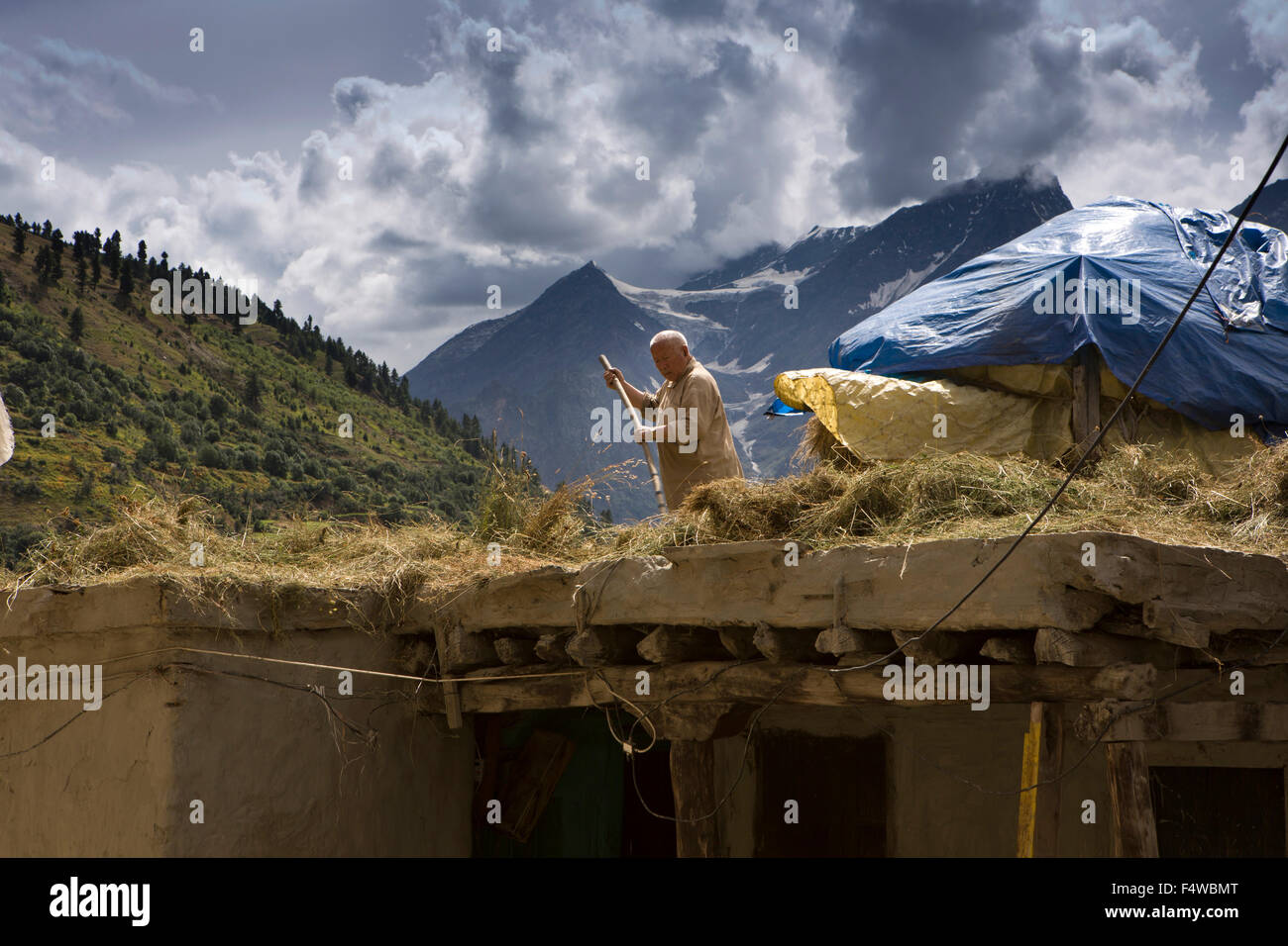 India, Himachal Pradesh, Lahaul and Spiti, Keylong Bazaar, man arranging harvested hay to dry on house roof - Stock Image