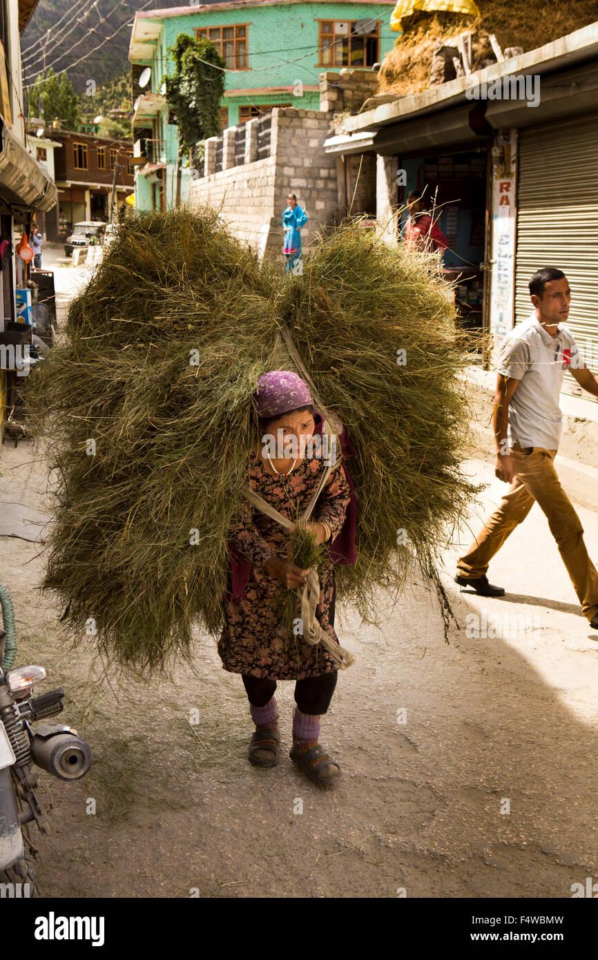 India, Himachal Pradesh, Lahaul and Spiti, Keylong Bazaar, woman carrying heavy load of harvested animal fodder - Stock Image