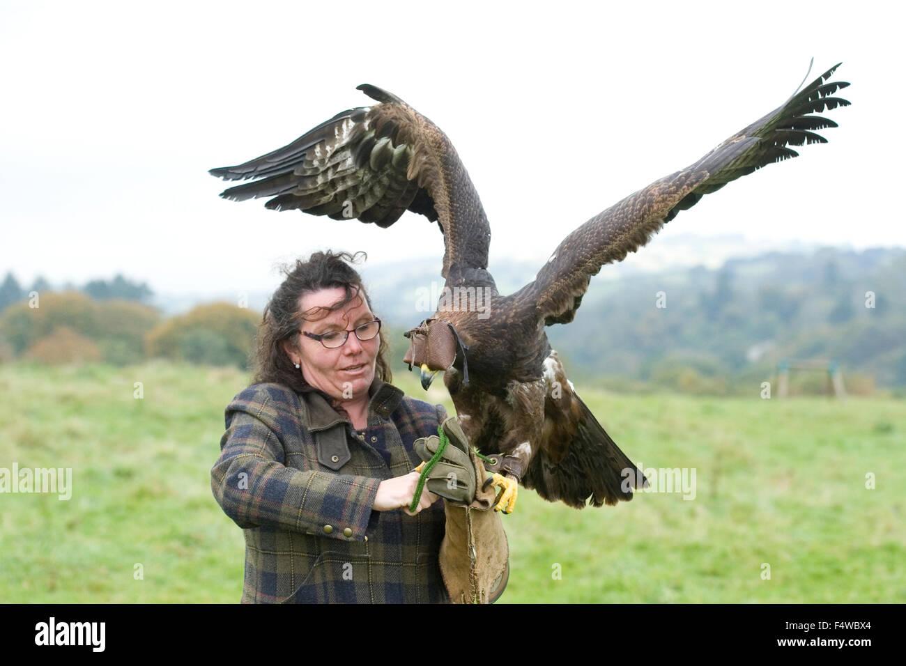 female falconer with eagle - Stock Image