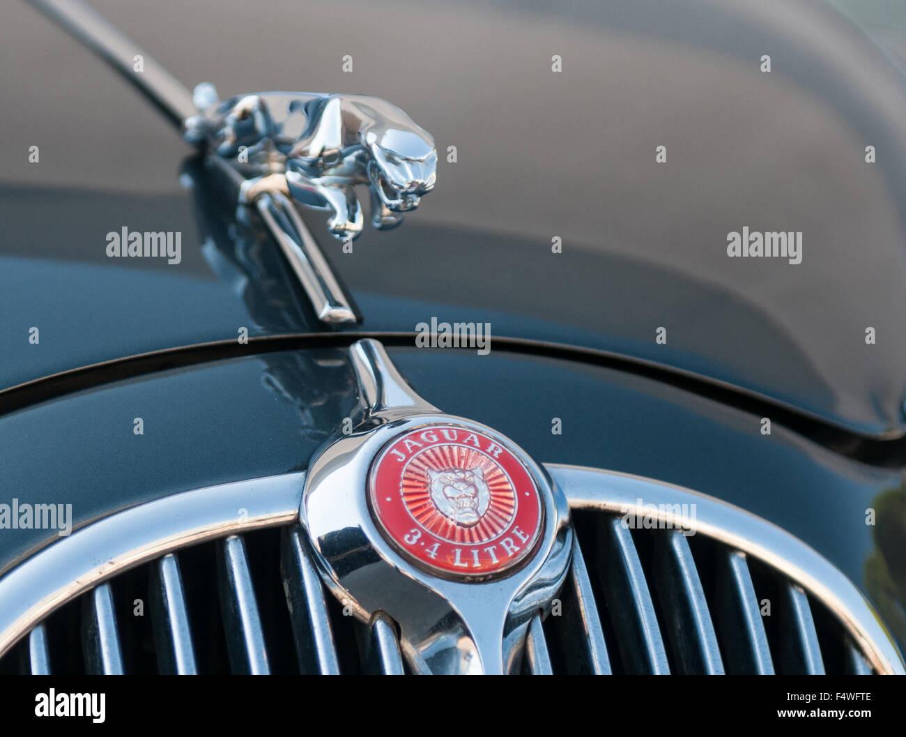 jaguar car logo stock photos jaguar car logo stock images alamy