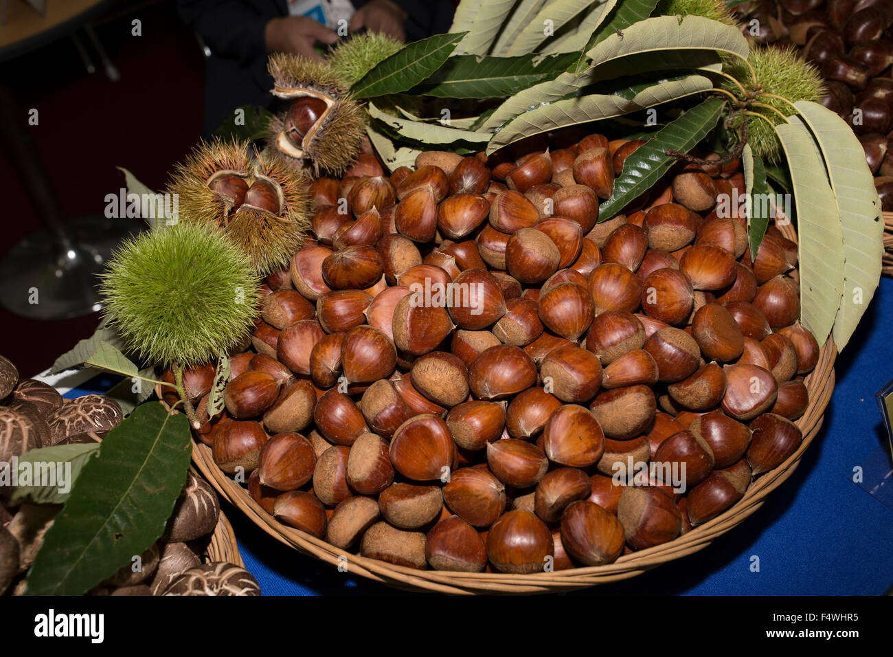 chestnut, close-up, crop, farm - Stock Image