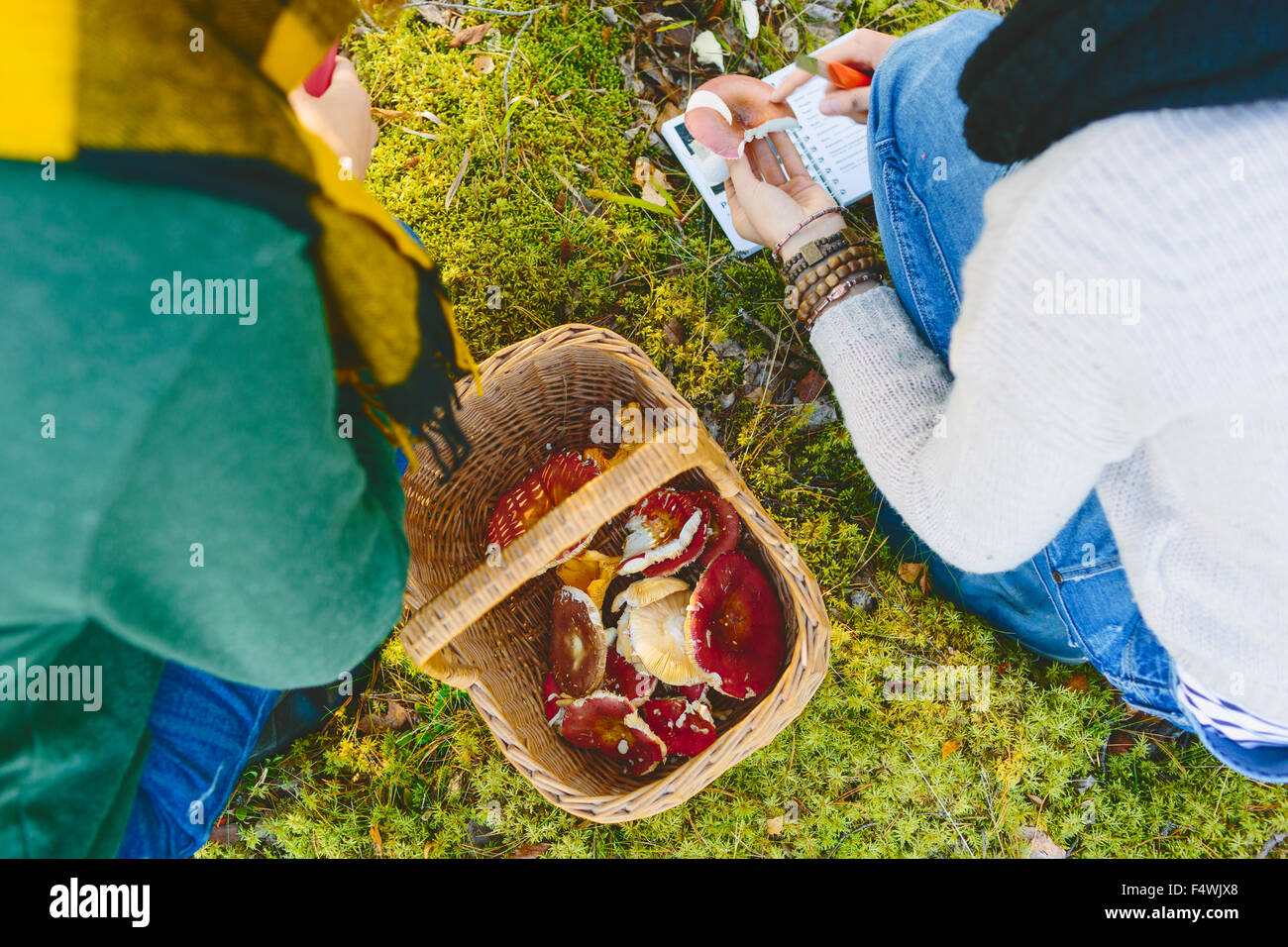 Finland, Etela-Savo, Huttula, Two young women crouching by basketful of Russula mushrooms - Stock Image